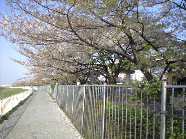 新芝川を散歩