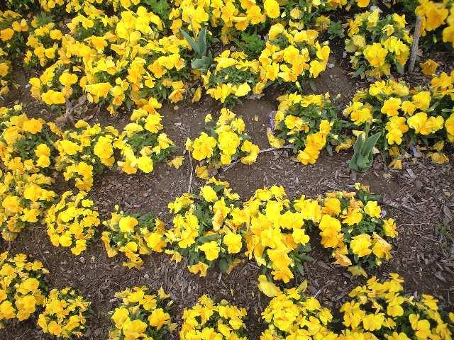 きょうの「花壇」
