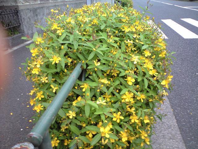 きょうの「花々」