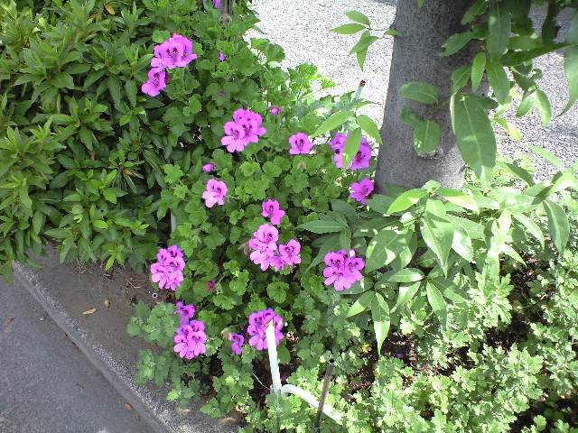 きょうの「花々2」